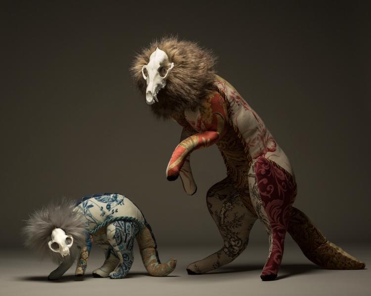 Cat&Coyote